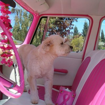 Traveling With Your Pet In A Car Seat