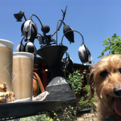 Dog-friendly San Marcos Restaurants Your Furry Family Member Will Love