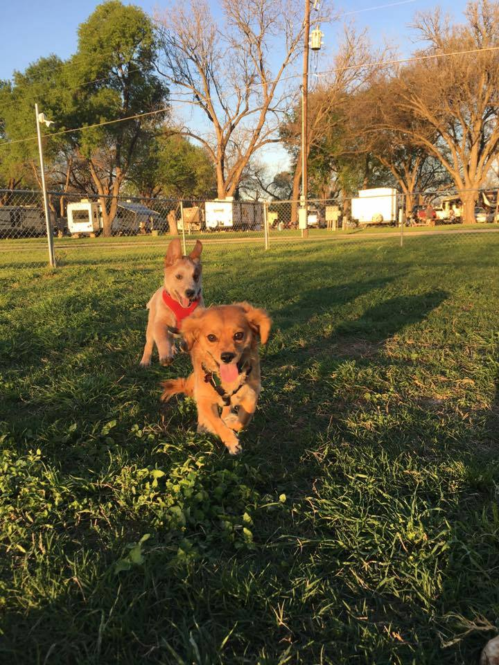 Dog Park at San Marcos RV Park