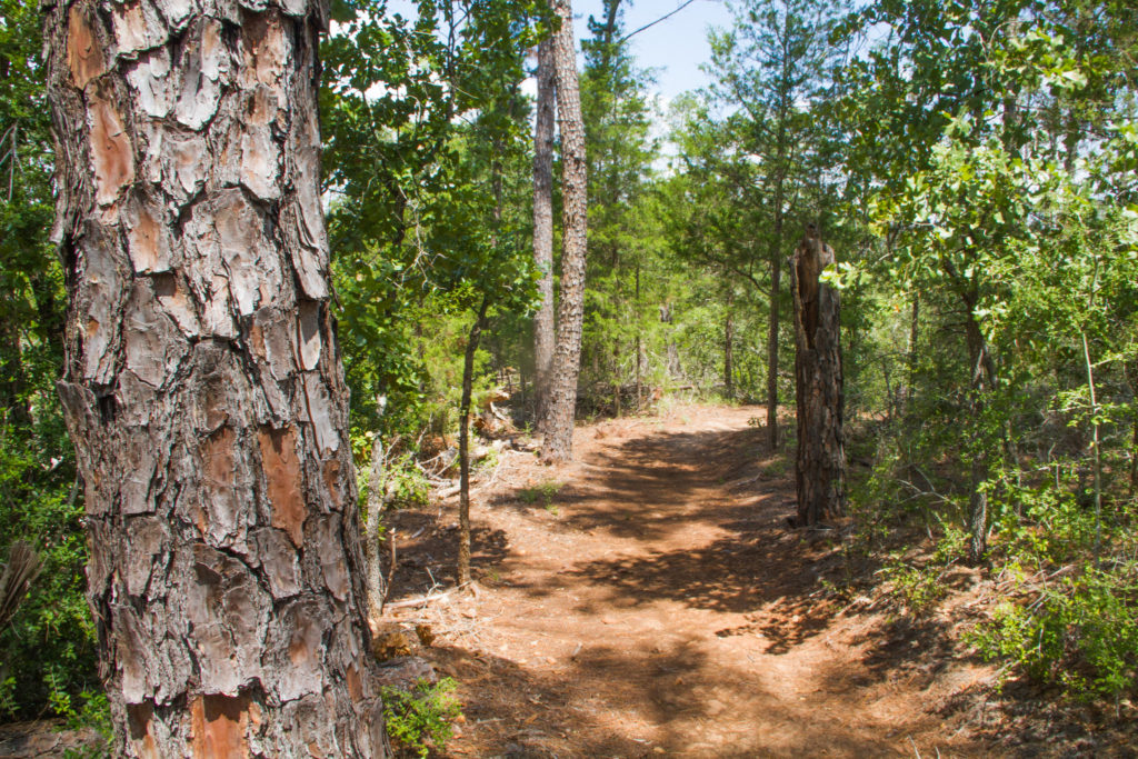 Buescher State Park Hiking Trail