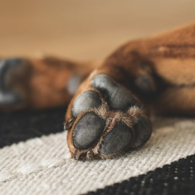 Protecting Your Dog's Paws From the Texas Heat