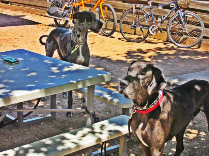 Dog-friendly Bar and Grill in San Marcos, TX